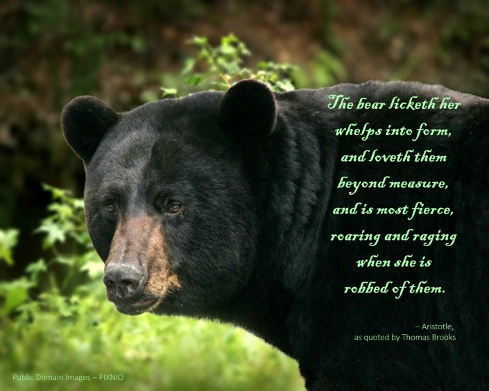 big-black-bear-detailed-ursus-americanus