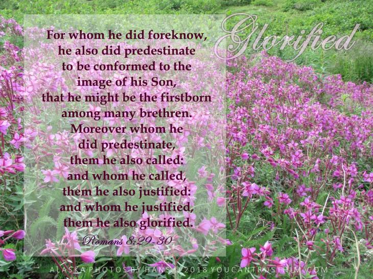 Romans 8:29-30